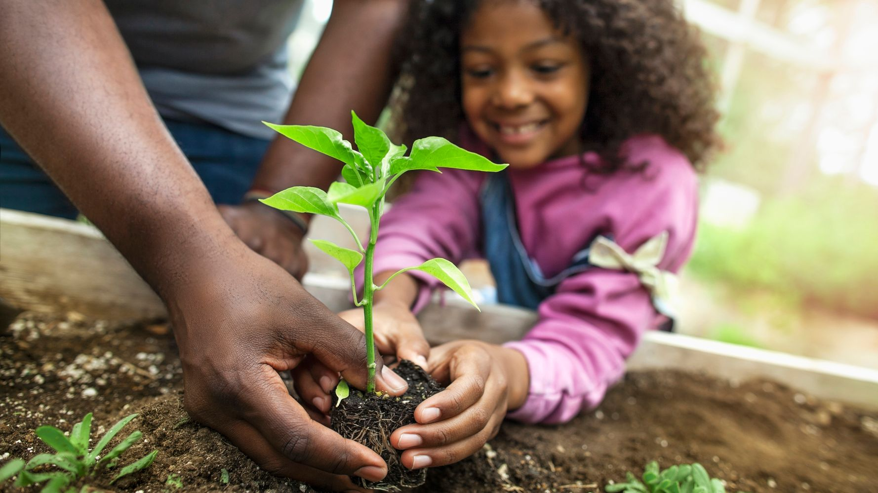 A young girl plants a sprout in a garden with the help of an adult